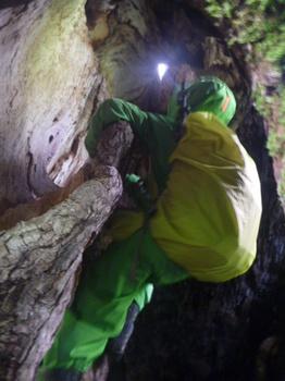 洞くつ探検?いえいえ木の洞です!